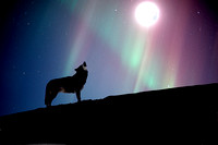 Wolf_Final_Moon_Filled-Edit